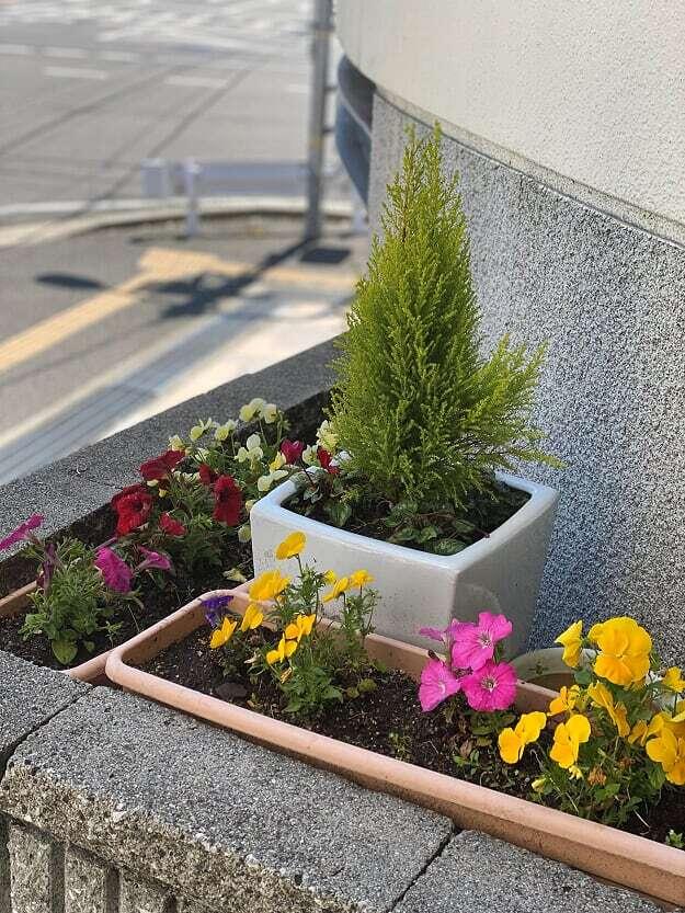 大好きな植物たち